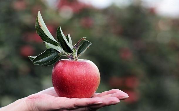 Elma kilo verdirmeye yardımcı olur mu?