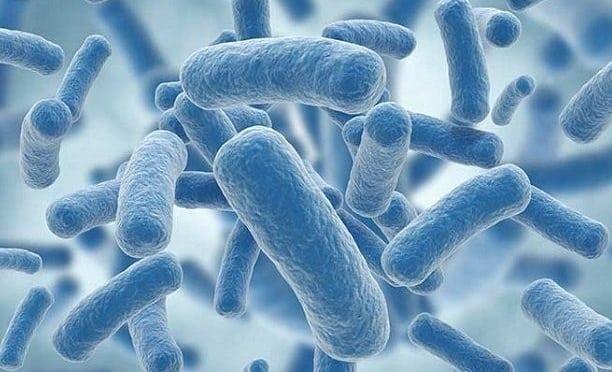 Bu bakteri kansere yakalanma riskini artırıyor